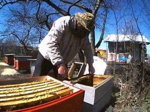 Пересадка пчел в улей