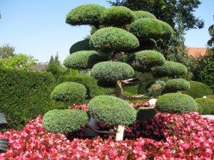 Декоративные деревья для сада: эффектные композиции на зависть соседям