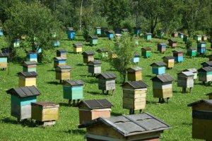 Устройство ульев для пчел своими руками