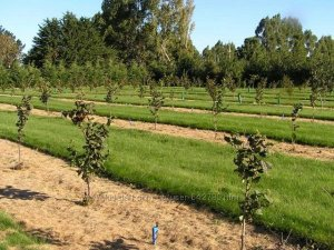 Закладка плантации
