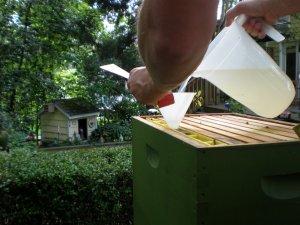 Как правильно организовать кормление пчел зимой, чем кормить
