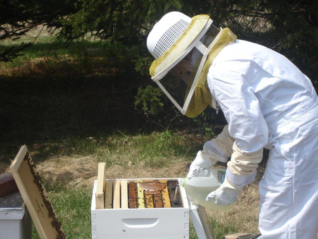 Кормление пчел весной