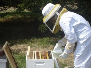 Кормление пчел весной: основные корма