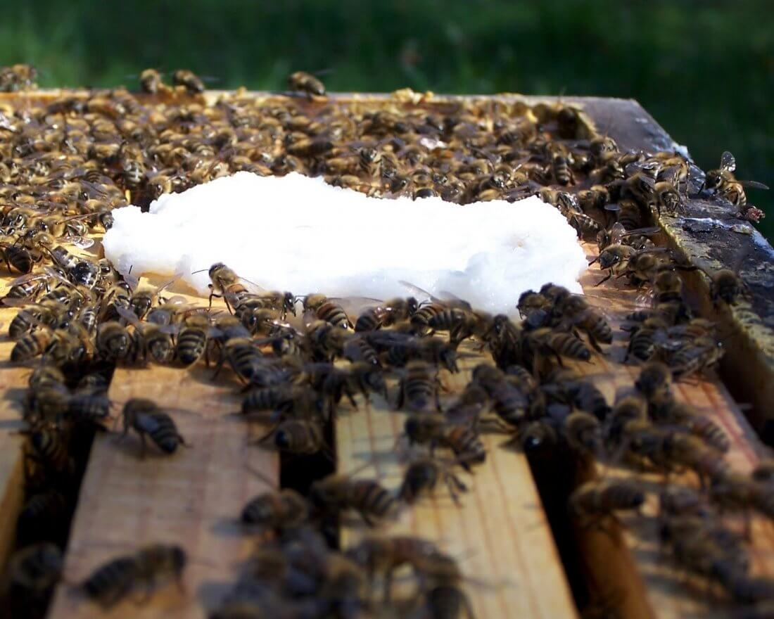 Летнее кормление пчел