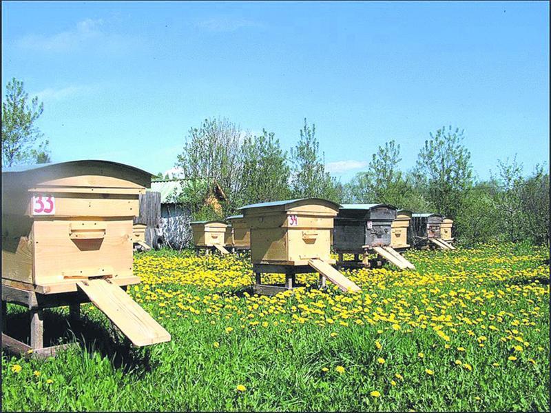 Бизнес план пасеки: как начать пчеловодство с нуля