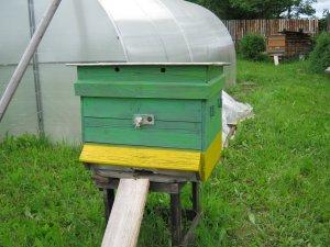 Особенности разведения и содержания пчел на пасеке