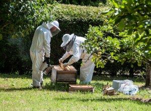 Пчеловоды на пасеке