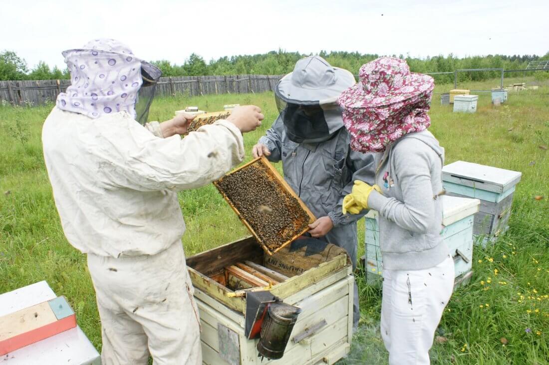 Покупка пчелиной семьи