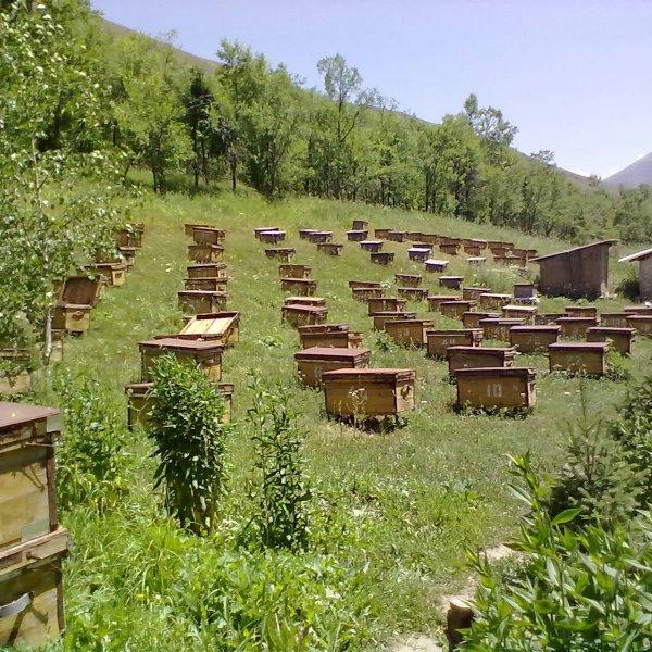 Прополис - полезный продукт пчеловодства