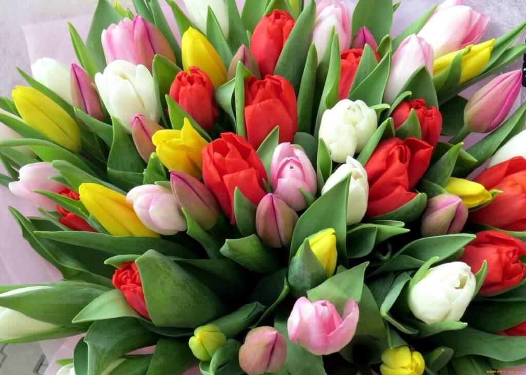 Тюльпаны: фото и названия лучших сортов, хранение в домашних условиях, уход за растениями