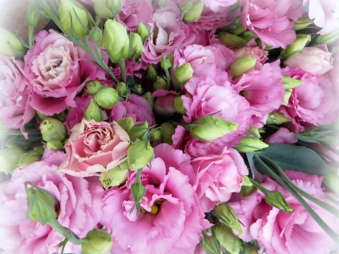 Сапфир розовая дымка
