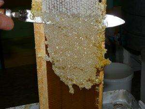 Пчелиный забрус: польза и вред, применение