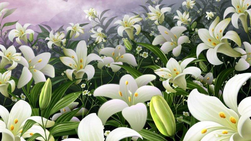 Великолепие лилий