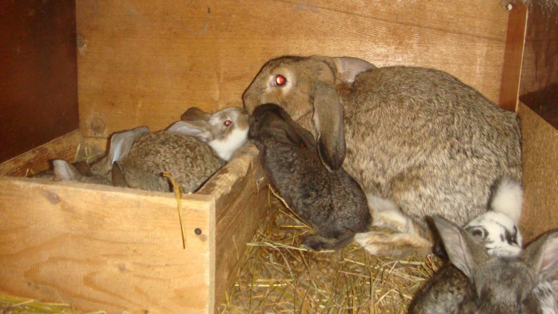Домик для крольчихи с приплодом