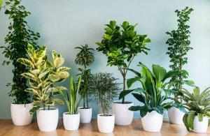 Белокрылка на комнатных растениях: как бороться и какими методами