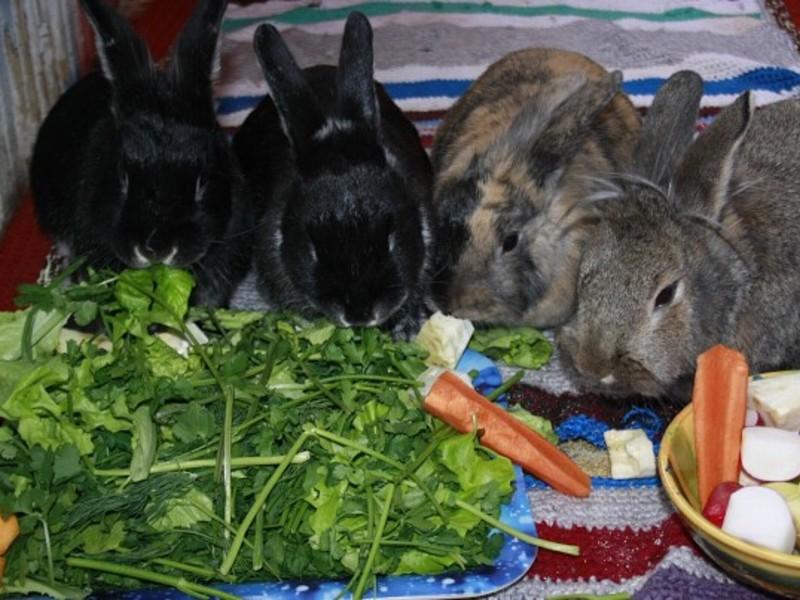 Mожно ли кроликам хлеб: правильный рацион