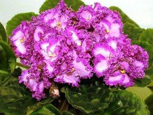 Маленькие комнатные растения: разнообразие видов цветочной флоры