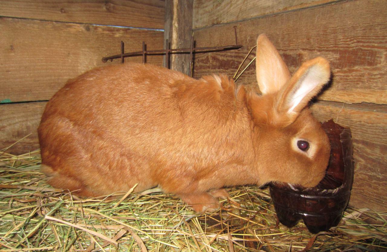 Разновидности кроликов: особенности разных пород и основы ухода за ними