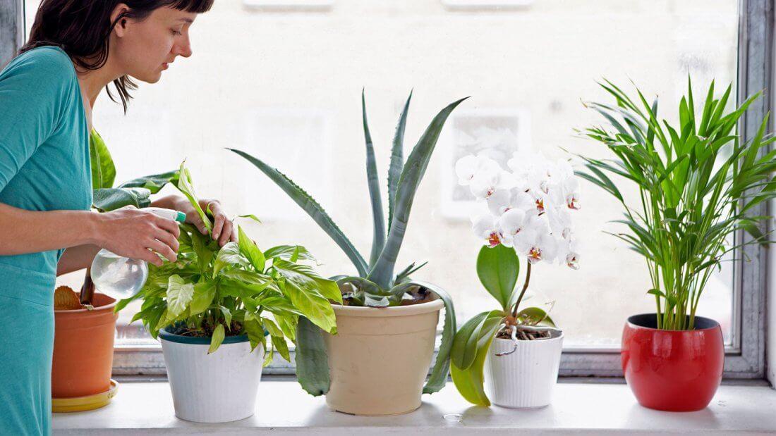 Лечение комнатных растений