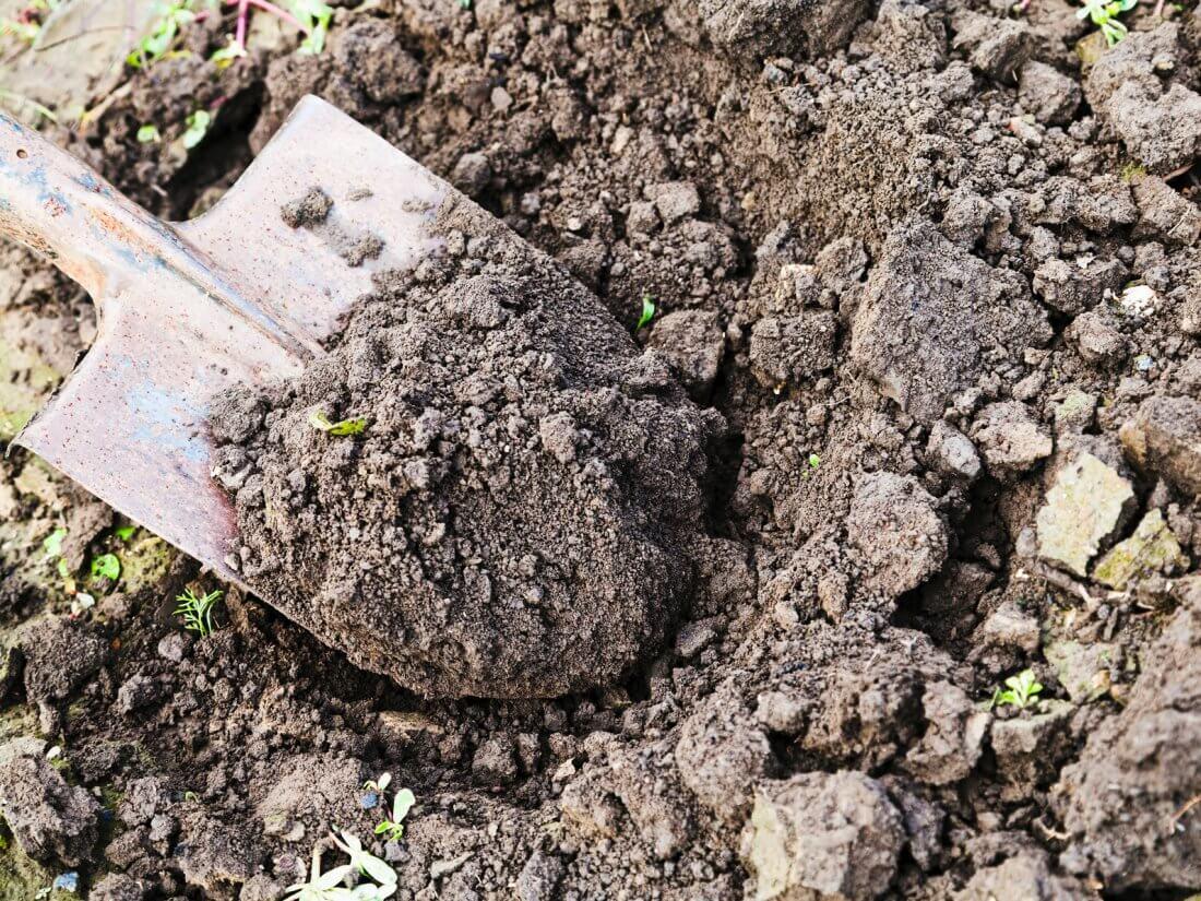 Агроном: Какие лопаты нужны в саду и огороде? в 2019 году