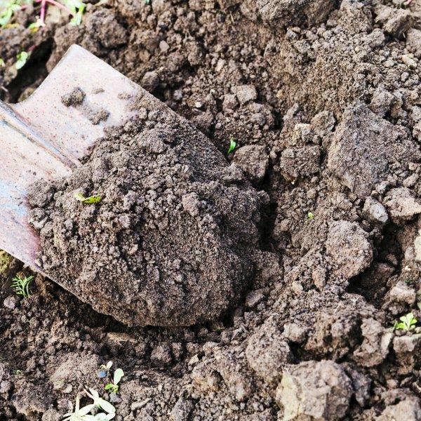 Лопата обычная для копания земли