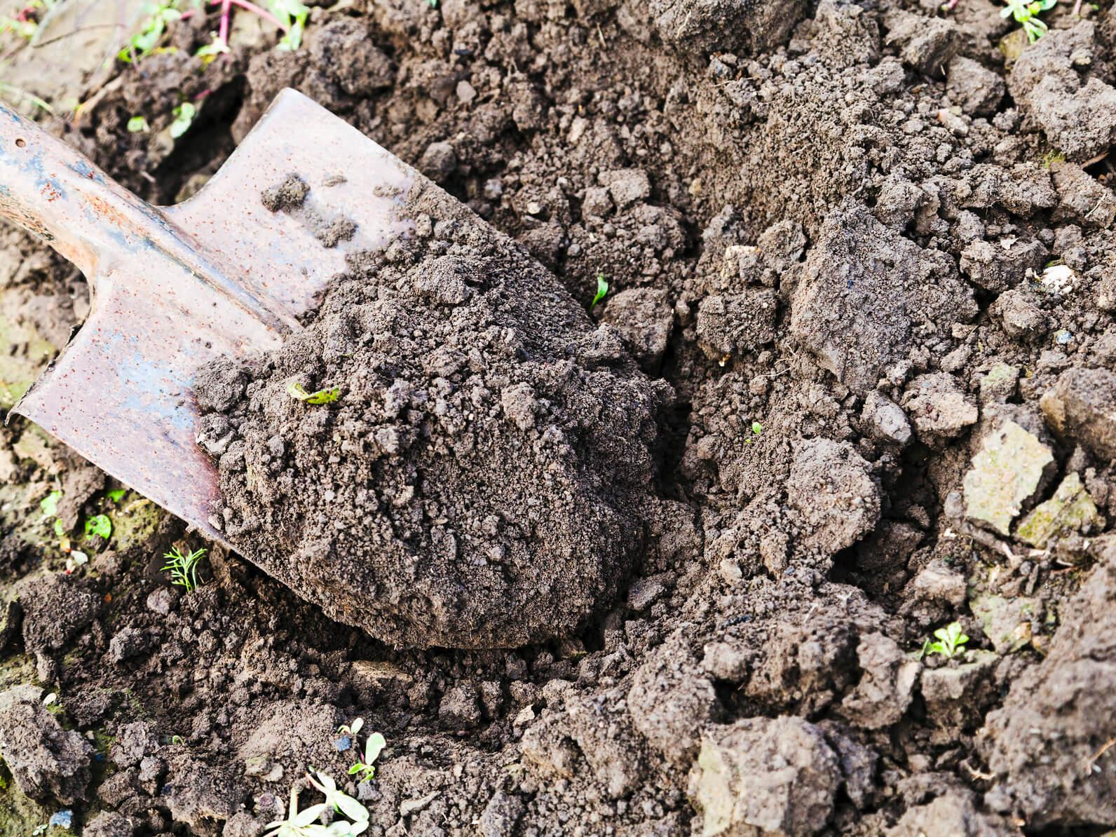 Лопата: это незаменимый инструмент для копания земли