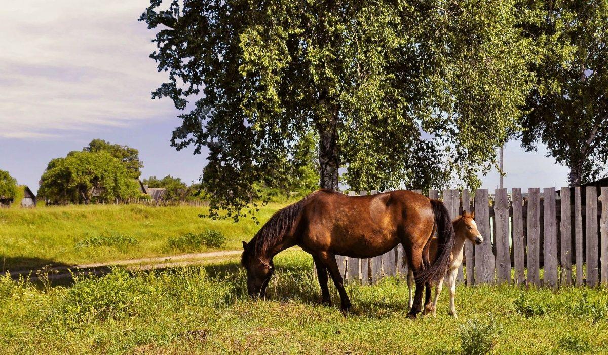 Содержание лошадей в деревне: советы по уходу за животными