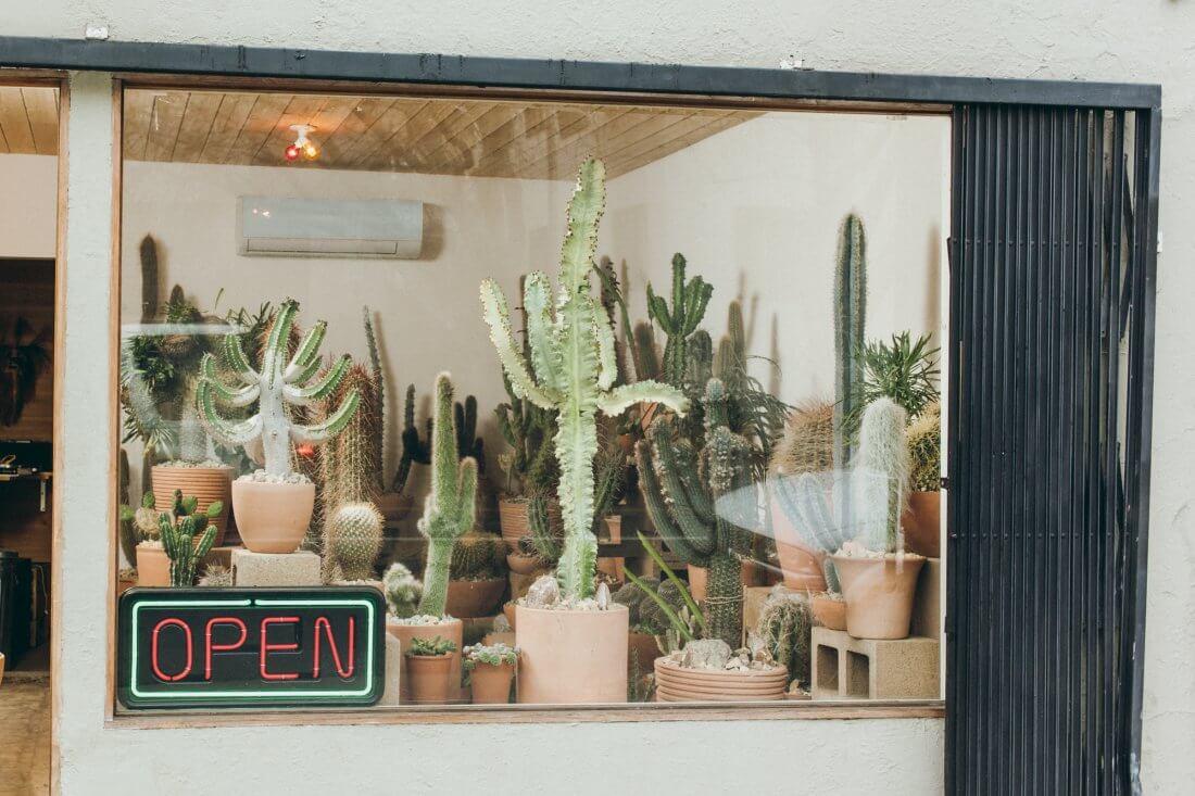 Магазин кактусов