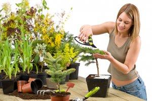 Болезни комнатных растений: сухие кончики листьев и устранение сухости