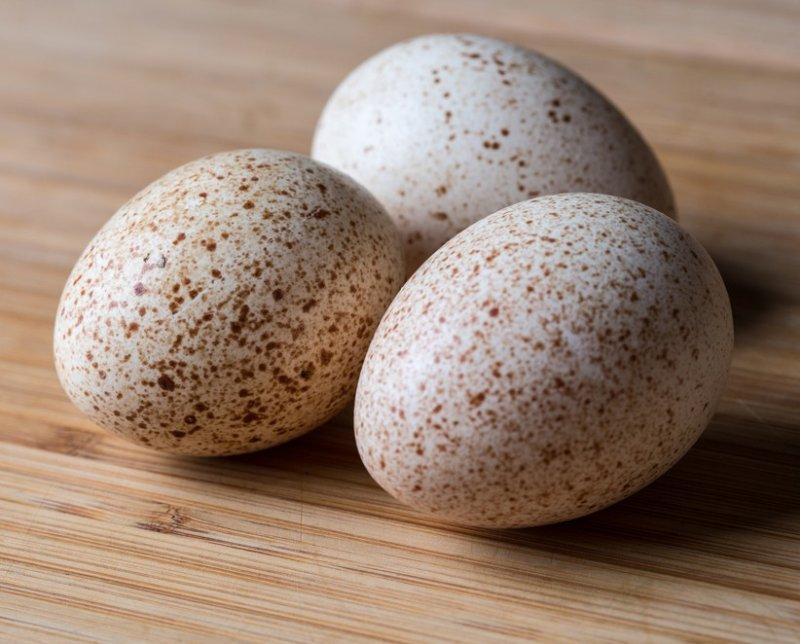 Польза индюшачьих яиц