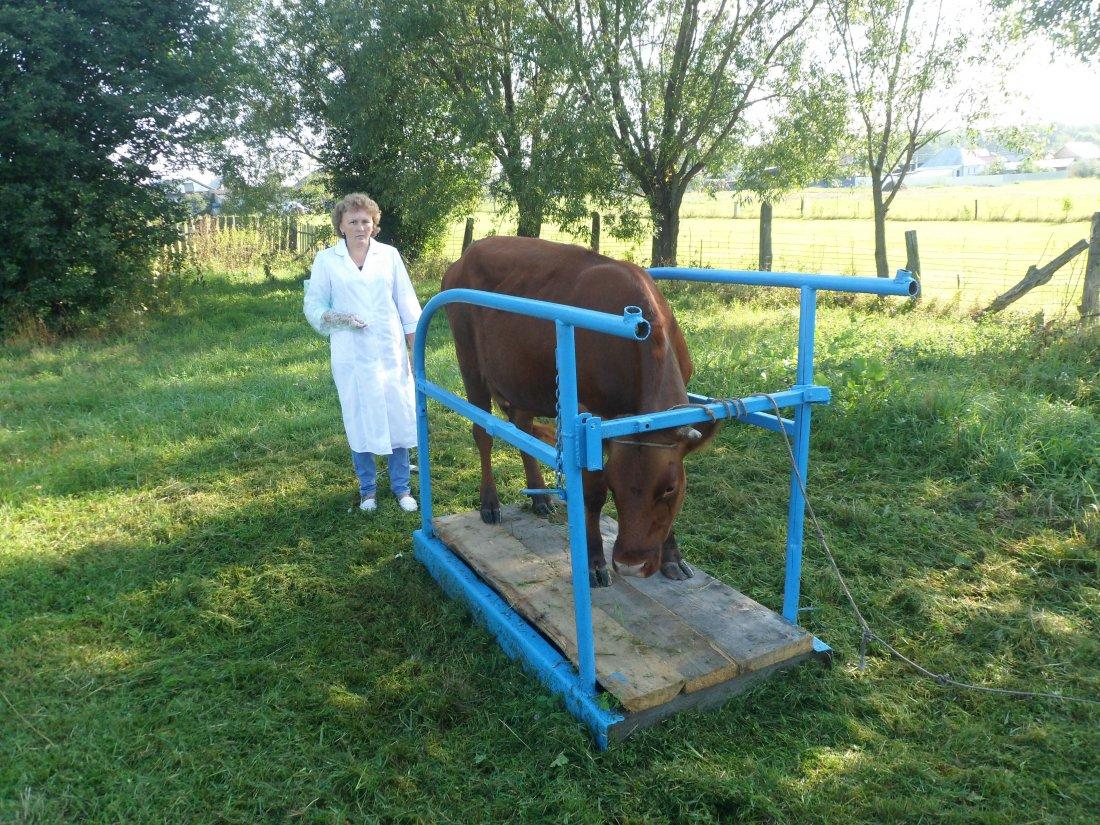 Пункт искусственного осеменения коров