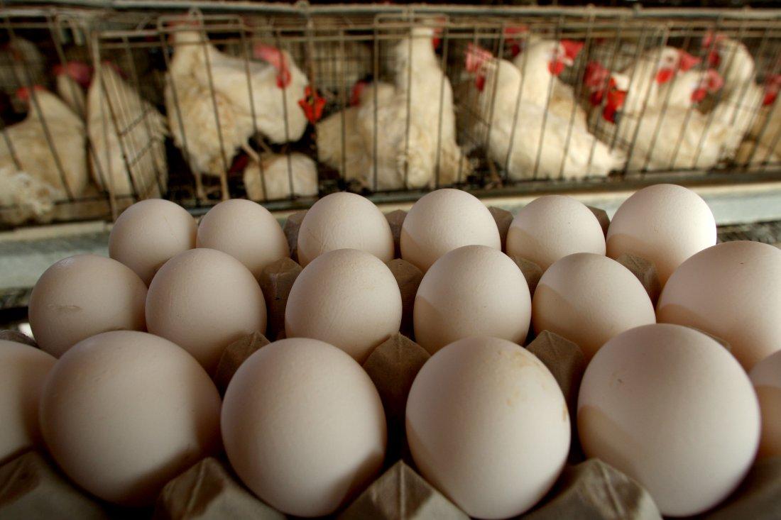 Рентабельность разведения кур