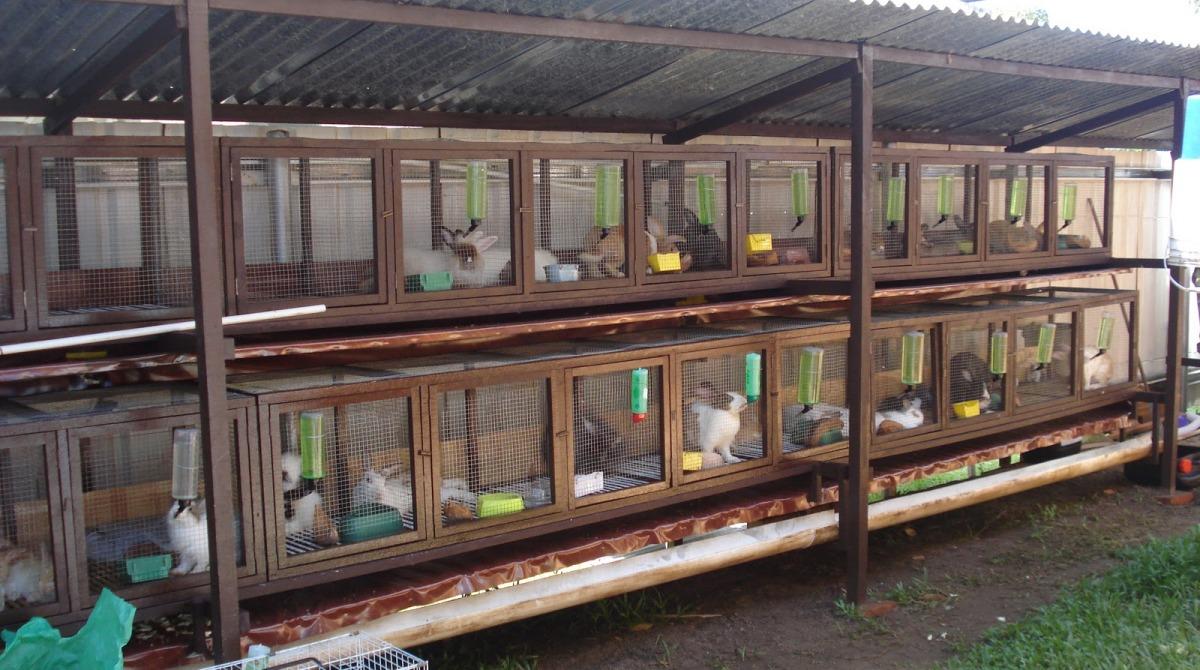 Кролиководство в домашних условиях: клетки и их виды