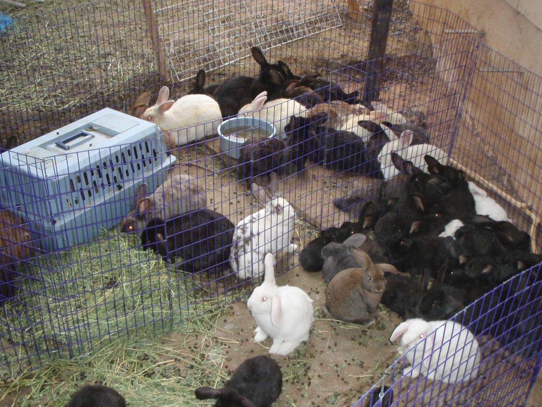 Содержание кролей в вольере