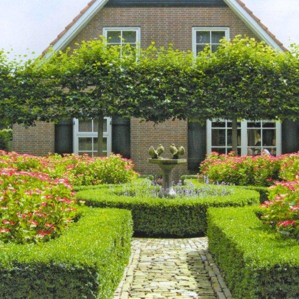 Ухоженный садовый участок