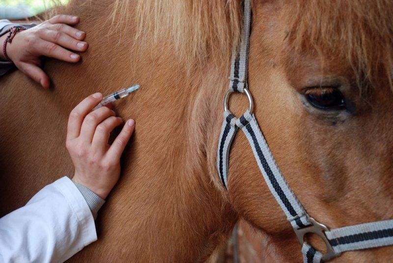 Вакцинация коня