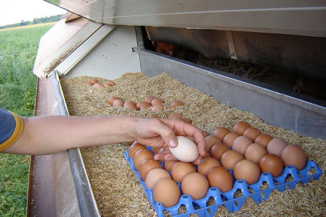Инкубатор для утиных яиц