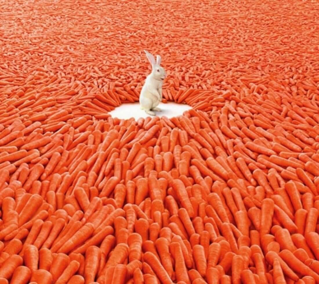 Корнеплоды для кроликов