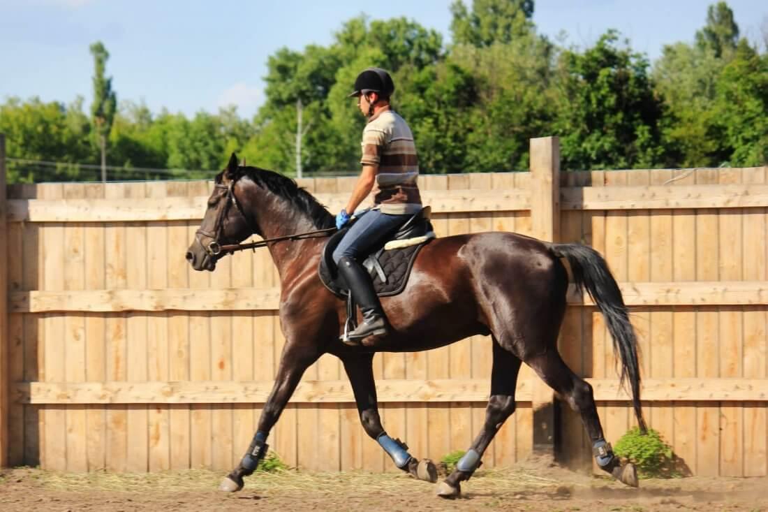 Лошадь хобби класса