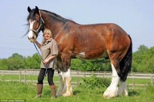 Самые большие кони: характеристика видов, применение ковки