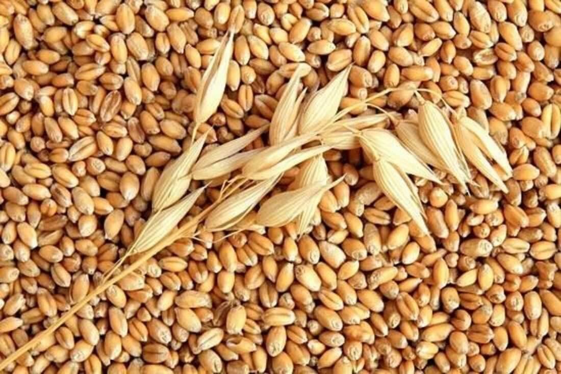 Зерно для кроликов