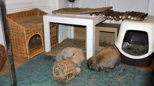 Домик для декоративного кролика: для чего он нужен, как обустроить