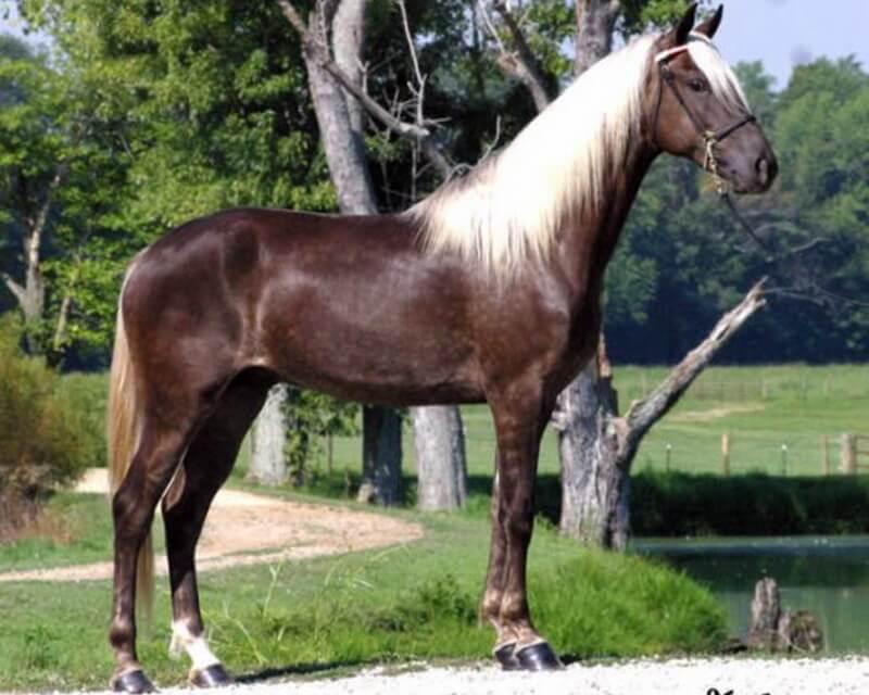 Игреневая масть лошадей: история возникновения и преимущества