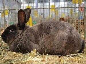 Как резать кролика: подготовка, описание процесса и необходимых инструментов для забоя