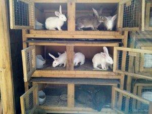 Как делать клетки для кроликов своими руками с отделами  по назначению