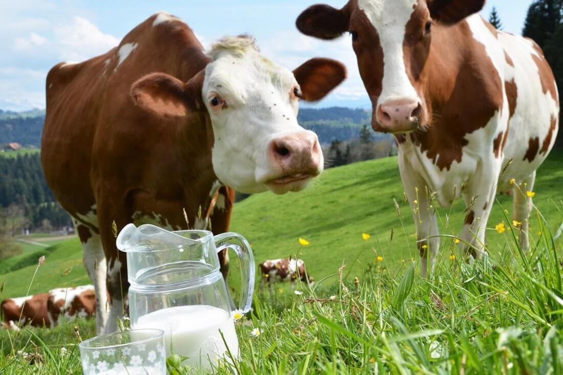 Молочная продуктивность