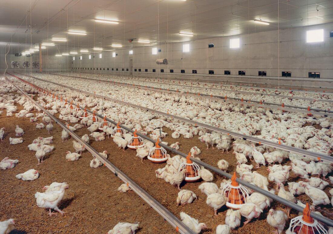 Подстилка «Биогерм» в фермерском хозяйстве