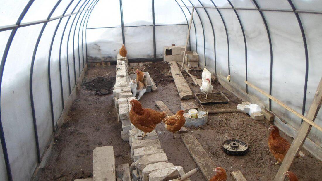 Просторный птичник для куриц