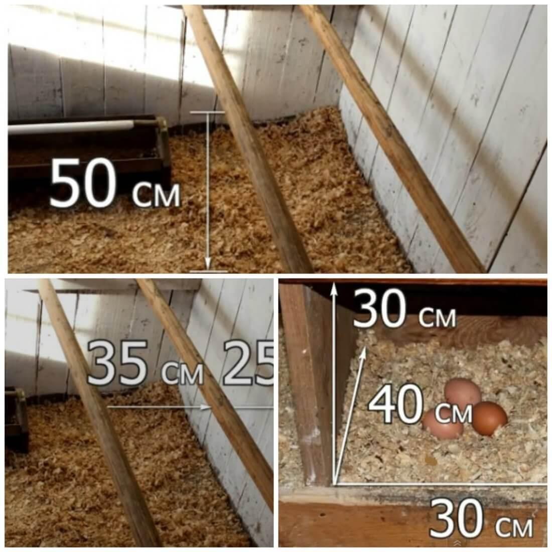 Размеры насеста и гнезда