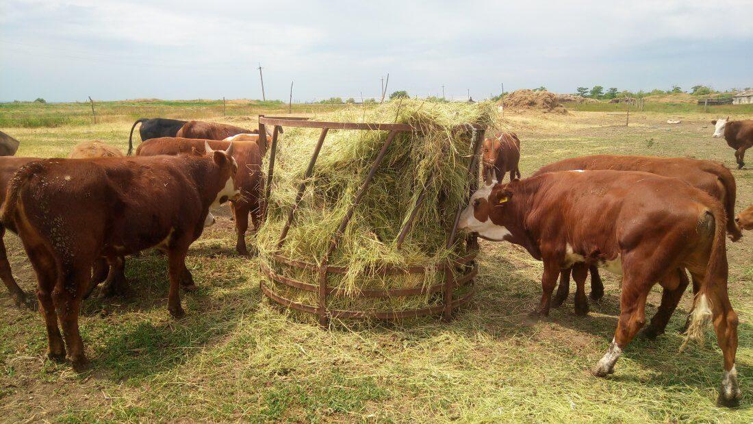 Сено для кормления коров